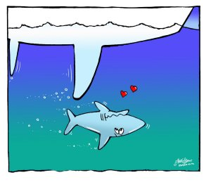Sailing cartoon - a shark in love with a boat - Hilarious sailing cartoons by Vic Wind App