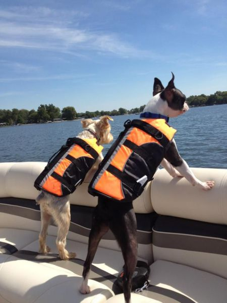 Dogs in lifejackets - Hilarious sailing cartoons by Vic Wind App